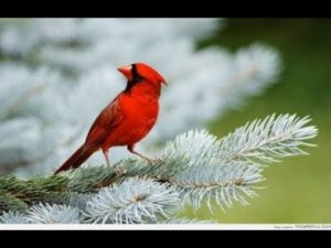 Mơ thấy chim đánh số mấy